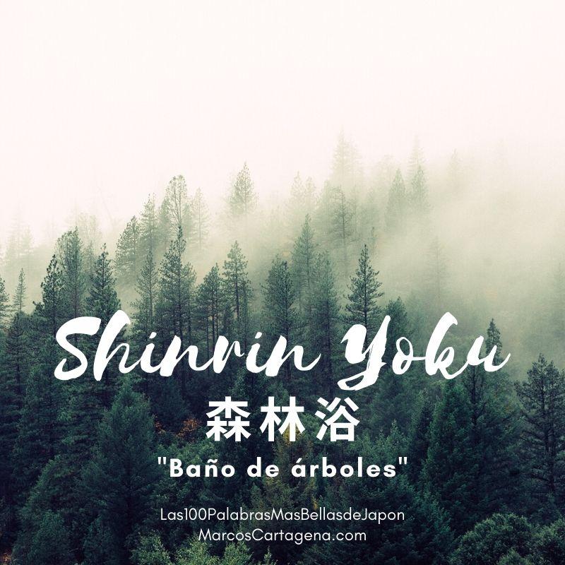 Shinrin yoku (2)